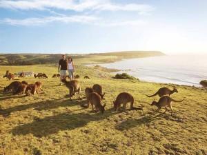 kangaroo_island_2